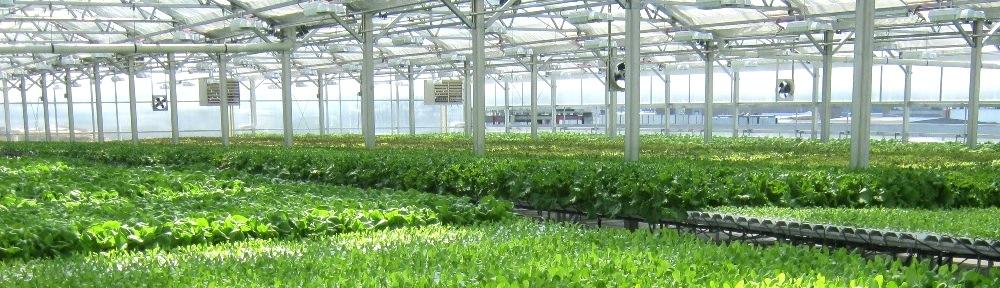 La filière agricole