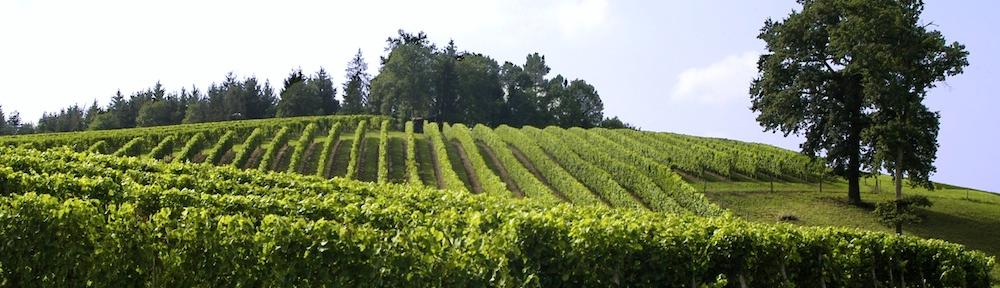 La filière viticole